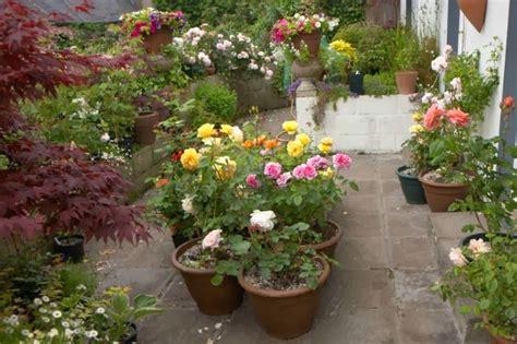 Cultivar Rosales En La Terraza  Guia De Jardin