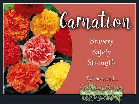 carnation color meanings carnation meaning symbolism january birth flower