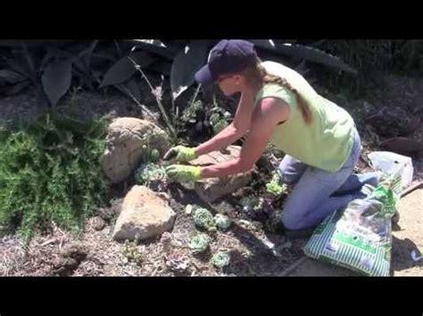 create  succulent pocket garden  laura