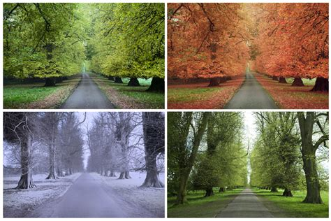 the four seasons what causes seasons