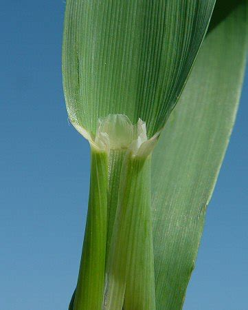 quia grass plants
