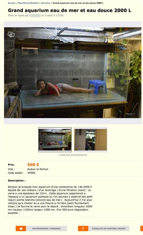 aquarium d occasion le bon coin le bon coin une pose pour un grand aquarium meltybuzz