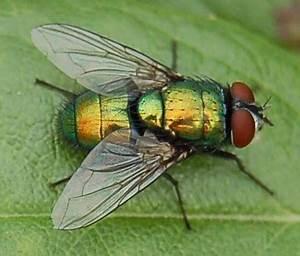 Se Débarrasser Des Mouches Naturellement : comment lutter contre les mouches l int rieur de la maison et naturellement ~ Melissatoandfro.com Idées de Décoration