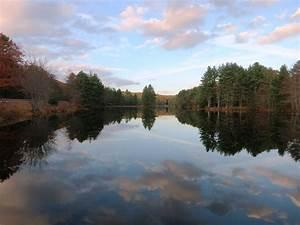 Thoreau & Trees: A Visceral Connection