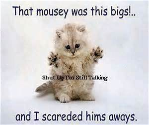 Cute Animals Saying Funny Quotes - Funny Daily Quotes