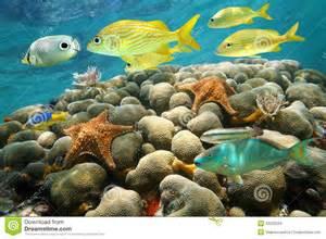 Coral Reef Fish Caribbean