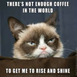 grumpy cat coffee grumpy cat on quot there s not enough coffee in the