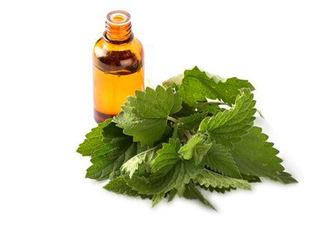 impressive benefits  melissa essential oil natural