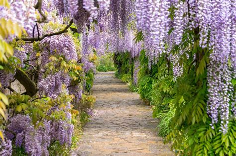 Kletterpflanzen Für Den Garten by 6 Mehrj 228 Hrige Kletterpflanzen