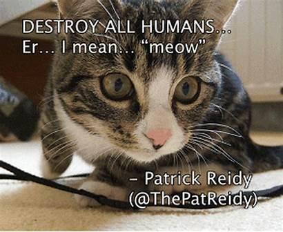 Comedians Captioned Hilarious Cat