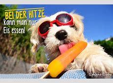 Sommer Sprüche Hund mit Eis SprücheSuche