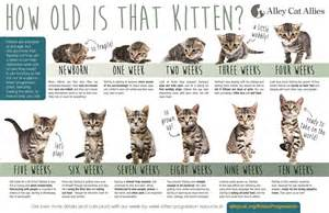 how to tell how a cat is kittens big cat rescue