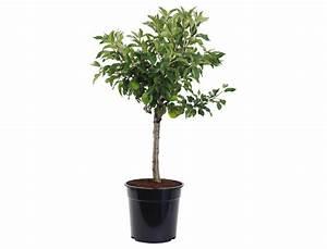 Dekorative Bäume Für Kleine Gärten : obstb ume f r kleine g rten obstgeh lze ratgeber garten schl ter ~ Markanthonyermac.com Haus und Dekorationen