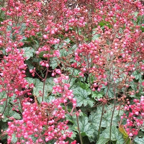 plants that grow in clay soil and shade 1000 images about plants for clay soil on pinterest other hummingbirds and shades
