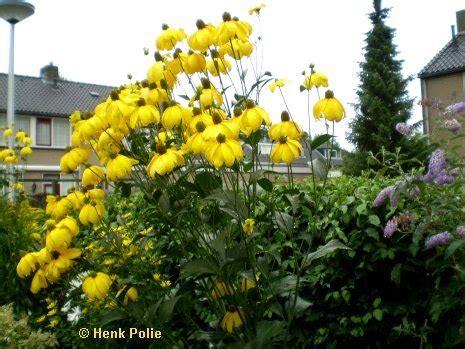 gele hoge bloemen augustus tuin kalender het hele jaar door een tuin met
