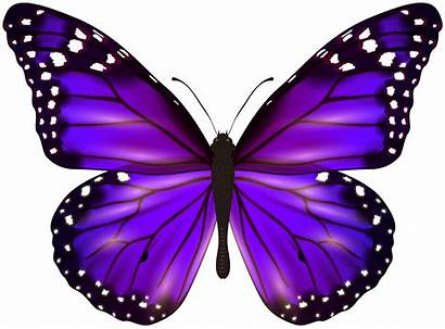 Butterfly Clipart Purple Colorful Butterflies Transparent Yopriceville