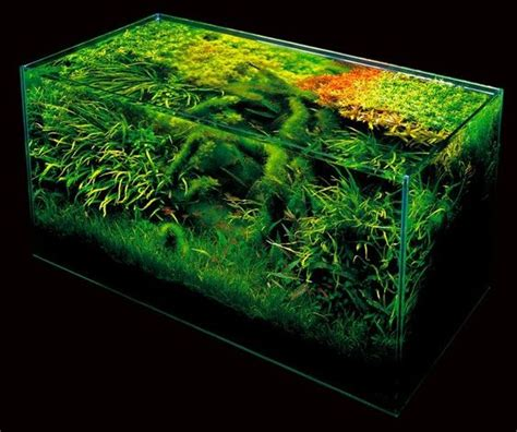 The Green Machine Aquascape by Ada Nature Aquarium Aquascape The Green Machine Fishy