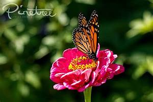 Pollinators  The Ultimate Companion Planting Guide Part 2