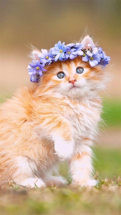 maine coon kitten cute fluffy hd cat wallpaper