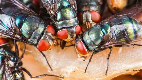 dirtier  fly   cockroach savannah termite