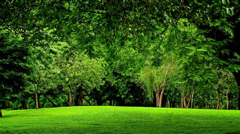 Green Forest Image by Forest Backgrounds Hd Free Pixelstalk Net