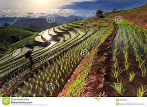 Rice Fields On Terraced At Chiang Mai, Thailand Stock ...