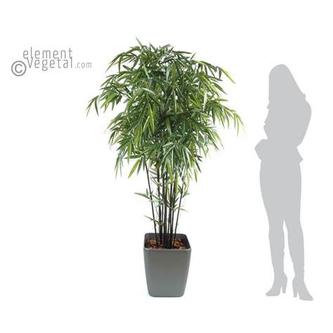 bambou non traant en pot bambou noir semi naturel en pot carr 233 elementvegetal grossiste en plantes stabilis 233 es et