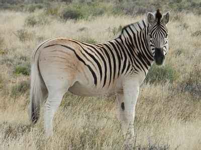 top   amazing extinct animals worldlistzcom