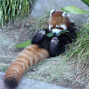 Funny animals o... Cute Animals