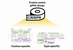 Crispr U2010tape  Protein U2010centric Crispr Guide Design