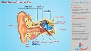 Sound Class 9 Science - Structure Of Human Ear