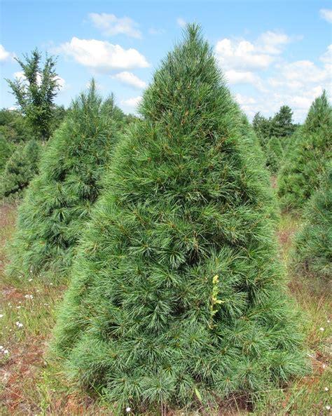 wholesale christmas tree  holiday trees