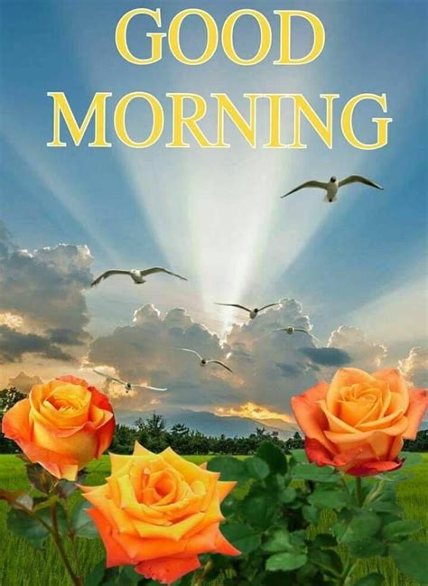 lovely sunrise morning quote pictures   images