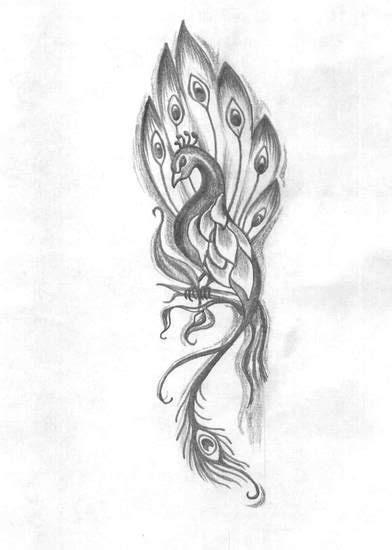 peacock drawing tattoo - Google Search   Peacocks   Pinterest   Drawing tattoos, Drawings and
