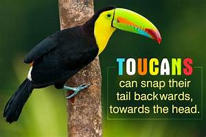 Undeniably Interesting Facts About the Colorful Toucan