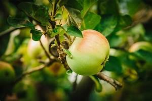 Wie Isst Man Grapefruit : wie viel zucker steckt im obst ~ Eleganceandgraceweddings.com Haus und Dekorationen