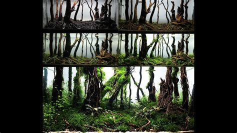 Forest Aquascape by My Forest Nature Aquarium Aquascape Step By Step