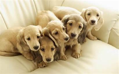 Dog Puppy Dogs 1080p Puppies Pets Animal
