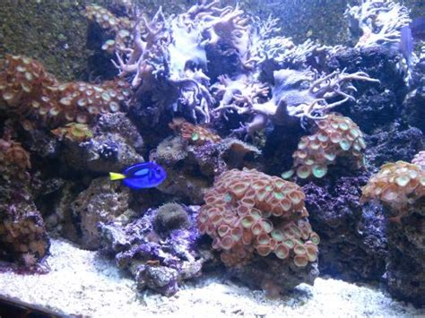 aquarium sea val d europe aquarium rond picture of aquarium sea val d europe marne la vallee tripadvisor