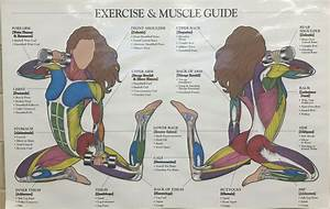 Exercise  U0026 Muscle Guide