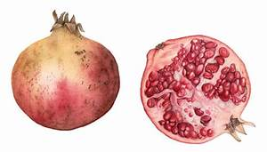 Pomegranates - Painting by Surrey Botanic Artist Fiona ...