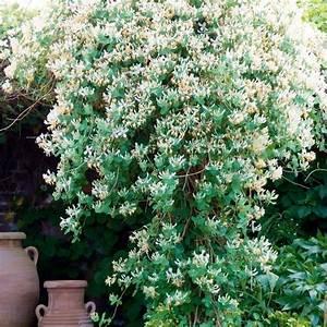 Rankpflanzen Winterhart Immergrün : die 10 facebook fragen der woche my secret garden ~ A.2002-acura-tl-radio.info Haus und Dekorationen