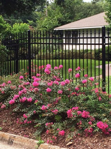 summer flowering shrubs sun flowering evergreen shrubs full sun www pixshark com images galleries with a bite