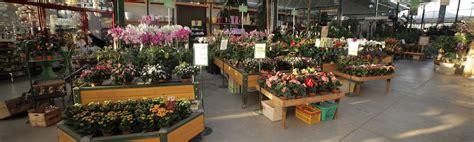 garden fiori e piante marino fiori garden store rivoli torino la nostra