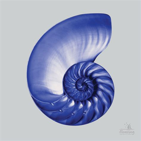 Nautilus Blue Shell, Floating Impressions