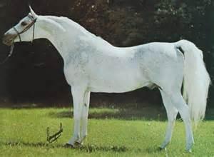 Arabian Horse Coat Colors