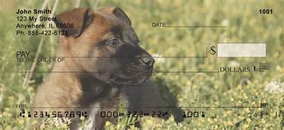 Malinois Belgian Puppies Checks 123cheapchecks Adf