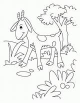 Goat Coloring Pages Goats Cute Billy Gruff Sheets Pygmy Cartoon Mountain Printable Baby Popular Getcoloringpages Coloringhome Library Clipart Animal sketch template