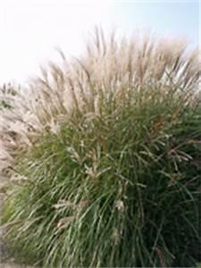 Kokoserde Für Welche Pflanzen : pflanzen ~ Orissabook.com Haus und Dekorationen