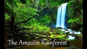 The Amazon Rainforest Facts  Hd